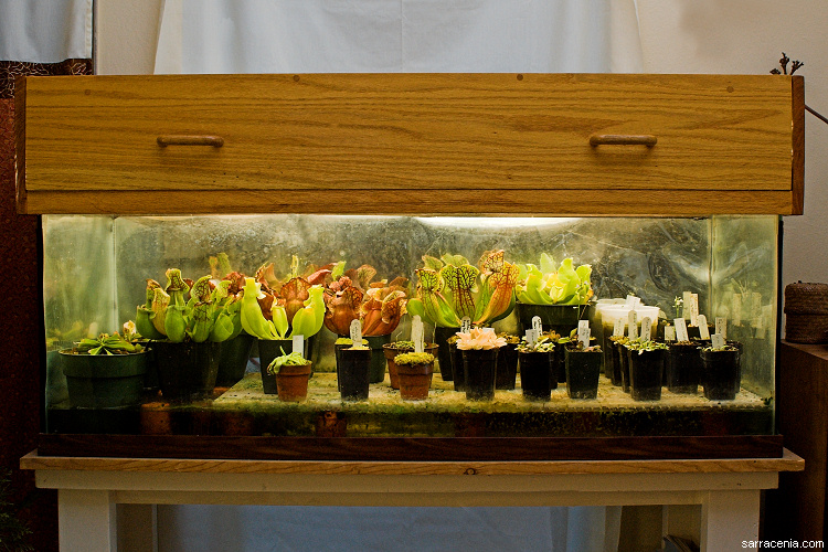 The carnivorous plant faq the carnivorous plant terrarium builder s