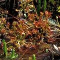 Partially submerged plants at a pond.
