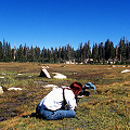 Fresno County, a high elevation fen in the Sierras.
